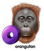 A letter O for orangutan - stock illustration
