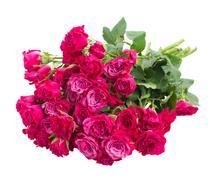 Pile of  fresh mauve roses Stock Photos