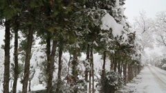 Snowfall on trees and snowy roads pan right Stock Footage