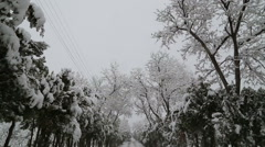 Snowfall on trees and snowy roads Stock Footage