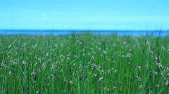 Summer meadow at eastsea Stock Footage
