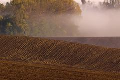 Foggy morning during late summer Stock Photos