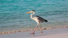 grey heron - stock footage