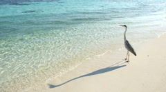 Grey heron Stock Footage