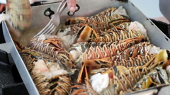 Cooking of lobsters Stock Footage