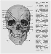 skull ru - stock illustration