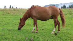 Beautiful horse in the meadow Stock Footage