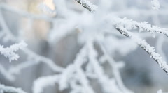 Frosted tree branche pan movement Stock Footage