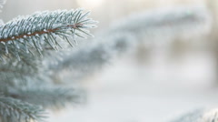 Fir branches covered with hoar frost, slide movement Stock Footage