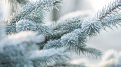 fir branches covered with hoar frost, slide movement - stock footage