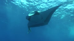 Stock Video Footage of manta ray Revillagigedos Islands Mexico