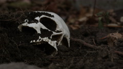 Human skull protruding from the dirt - Forensics, Murder and Crime Stock Footage