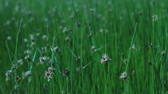 Summer meadow close Stock Footage