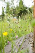 Germany, Baden-Wuerttemberg, Ueberlingen, bee swarm at bee box Stock Photos