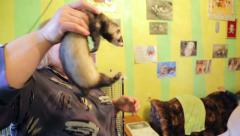 Animal shelter, guide shows ferret - stock footage