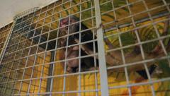 Animal shelter, monkey in a cage Stock Footage