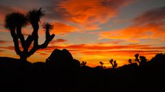 Joshua tree sunset cloud landscape california national park Stock Photos