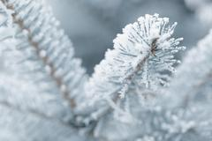 frosty fir twigs in winter covered with rime - stock photo