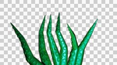 Stock Video Footage of tentacles 1 arms tentacle