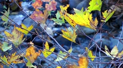 Leaves and creek Stock Footage