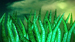 Cthulu background  tentacles Stock Footage