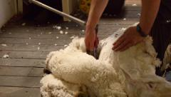 Shearing Along A Sheep's Back Stock Footage