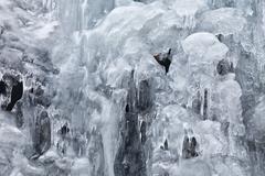 fringe of ice - stock photo