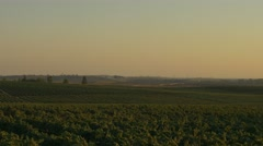 Vineyard at sunset 4K.mp4 Stock Footage