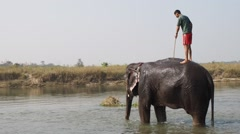 Mahout baths his elephant Stock Footage