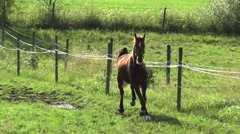Horse bucks and gallop after meadow Stock Footage