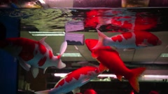 In the aquarium fish in swimming, very interesting Stock Footage