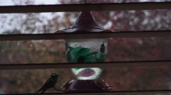 Humming bird eating in the rain Stock Footage
