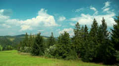 4K Timelapse of clouds and beautiful green coniferous trees. Video without birds Stock Footage