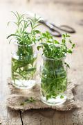 Stock Photo of fresh thyme and rosemary in glass