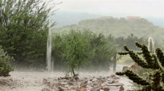 Rain on tree in Arizona desert, cactus in foreground Stock Footage
