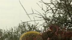 Branches in rain in Arizona desert Stock Footage
