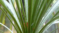 Rainfall Slow Motion. Yucca Plant in Background. Arkistovideo