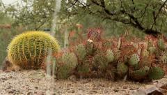 Rain on cactus in Arizona desert Stock Footage