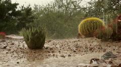 Rain on cactus and succulent in Arizona desert Stock Footage