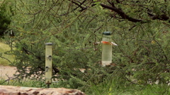 Desert birds at feeder after storm Stock Footage