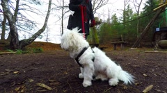 Lovely cotton dog in the forest Stock Footage