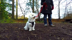 Nice Coton de Tulear dog sitting on the ground in the forest Stock Footage
