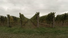 Vineyard Rows (Tracking) - stock footage
