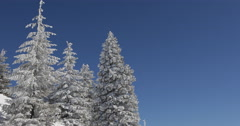 Spectacular Beautiful Fir Trees Branch Twigs Loaded Snow Capped Covered Blue Sky Stock Footage