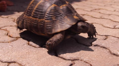 The tortoise,  turtle and the child communicate,play Stock Footage