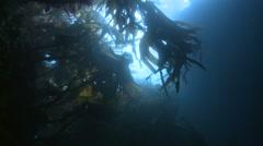 Algae Bretagne France Stock Footage
