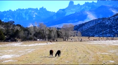 Horses Grazing Colorado Mountains Fall - stock footage
