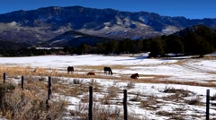 Winter Horses Grazing In the Mountains Stock Footage