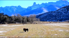 Horses Grazing Mountain Background - stock footage
