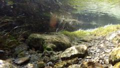 Trout into a brook (Underwater shot) Stock Footage